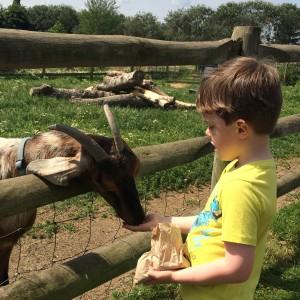 Hounslow Urban Farm feeding goats